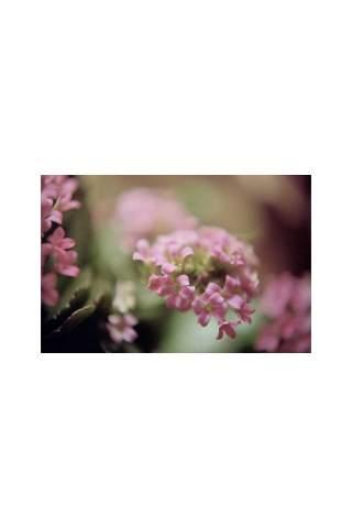 """""""In Bloom"""" by Miles Parenteau"""