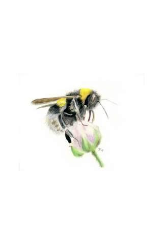 """Pollen Jock"" 8 x 10"" Giclee print by Jason Petkau"