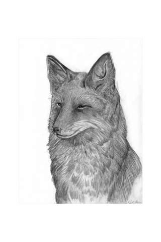 """Sly Fox"" 9 x 12"" Giclee print by Kaylene Striker"