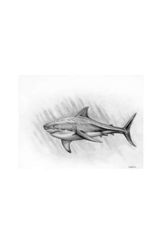 """""""Shark"""" 9 x 12"""" Giclee print by Kaylene Striker"""