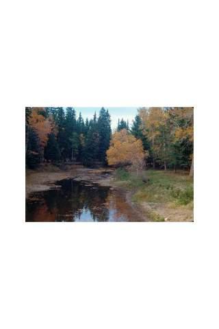 """""""Fall Colors"""" photograph by Miles Parenteau"""