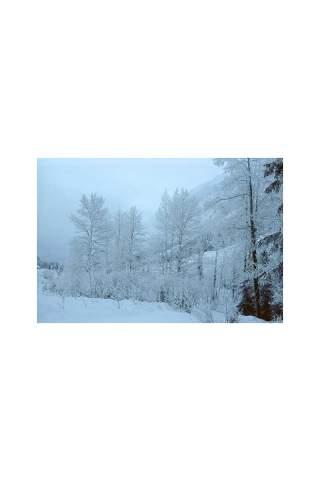 """""""Frost"""" by Miles Parenteau"""
