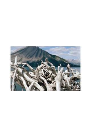 """""""Driftwood"""" by Miles Parenteau"""