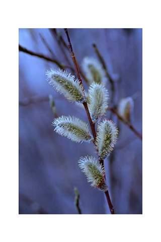 """Spring Sign"" by Miles Parenteau"